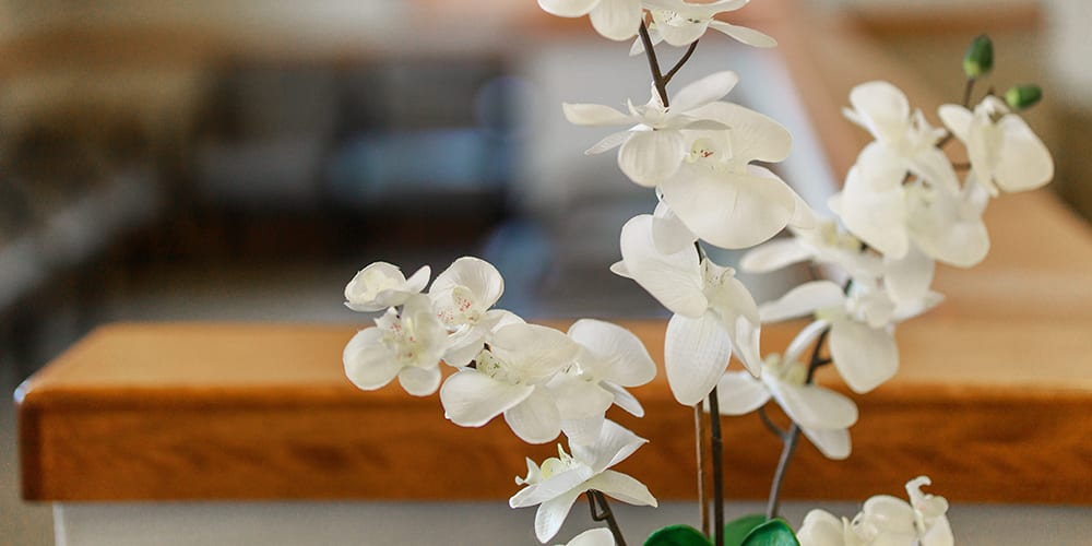 orchids plant in the midland office
